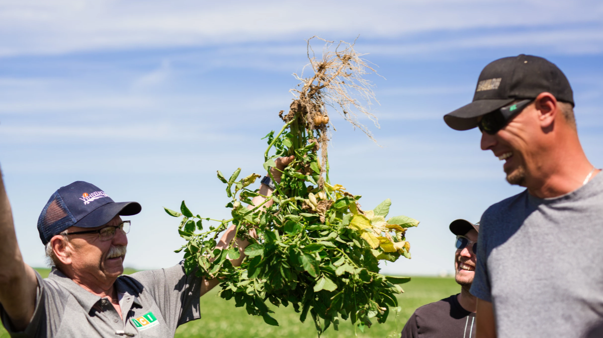 The farmer above has a lot to smile about, having a potato crop grow on alkali land that for years, never produced anything - all because of AdvancedAg's P solubilizing bacteria.